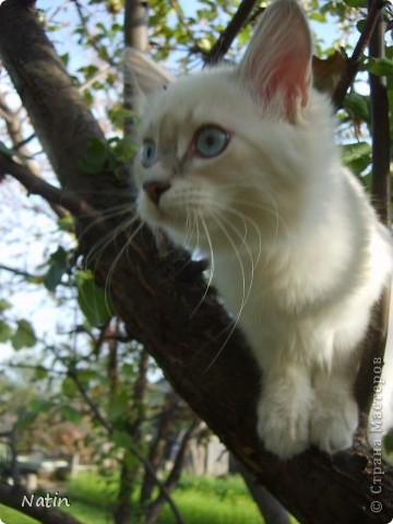 Давайте знакомиться - это Алиса. Наша любимица, умница и красавица.  фото 8