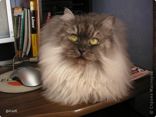 Когда я сижу за компьютером, Кузька всегда рядом, обязательно залезет на стол или на колени. фото 1