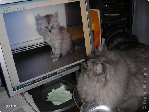 Когда я сижу за компьютером, Кузька всегда рядом, обязательно залезет на стол или на колени. фото 5