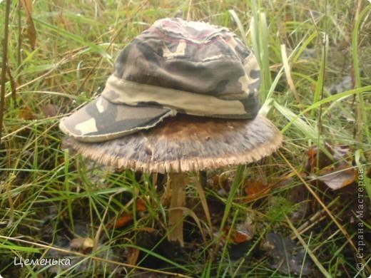Очень люблю собирать грибы. Не могла не похвастаться такими красавцами. фото 3