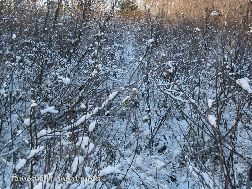 Снег на Урале фото 9
