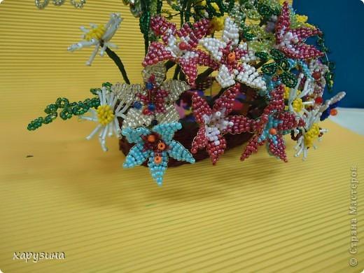 Цветные сны. фото 5