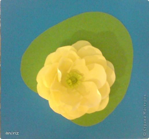открытка - кувшинка фото 2