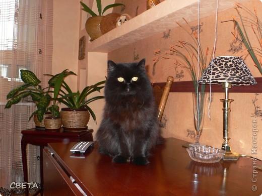 Преводитель дворянства - Симба. фото 5