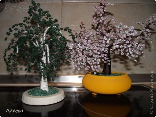 Мои  березка  и  сакура. фото 1