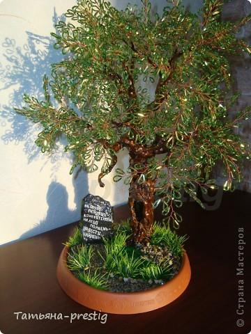 Могучий дуб ( 45 см )   фото 1