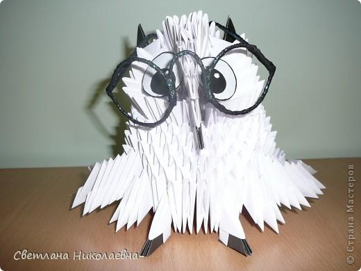 Попугай фото 2