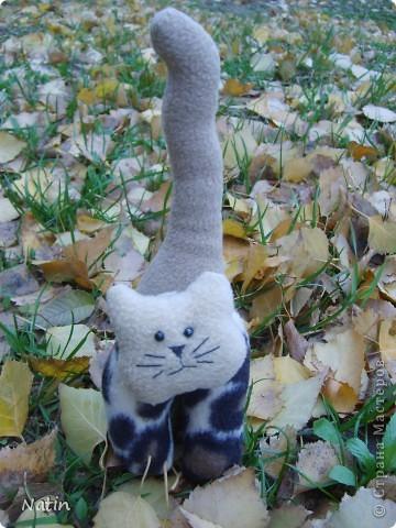 ОН ходит следом за котом,  ОН за котом следит тайком.  фото 2