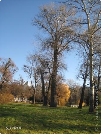 Дендропарк «Александрия» – самый большой в Украине. Он расположен на склоне реки Рось и занимает площадь в 200 га. На его территории растет больше 600 видов деревьев и кустарников и более 700 разновидностей травянистых растений. В общем, в парке растет 1360 видов, разновидностей, сортов и форм растений. При строительстве парка был грамотно обыгран рельеф – три глубокие, параллельные склону реки, балки, расширяющиеся к берегам.  фото 12