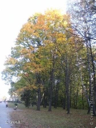Дендропарк «Александрия» – самый большой в Украине. Он расположен на склоне реки Рось и занимает площадь в 200 га. На его территории растет больше 600 видов деревьев и кустарников и более 700 разновидностей травянистых растений. В общем, в парке растет 1360 видов, разновидностей, сортов и форм растений. При строительстве парка был грамотно обыгран рельеф – три глубокие, параллельные склону реки, балки, расширяющиеся к берегам.  фото 19