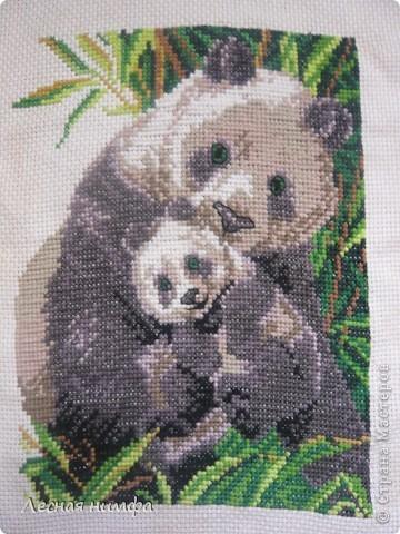 Панда с детёнышем. фото 1