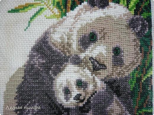 Панда с детёнышем. фото 2
