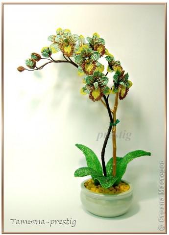 Орхидея (Фаленопсис) (h=44см)