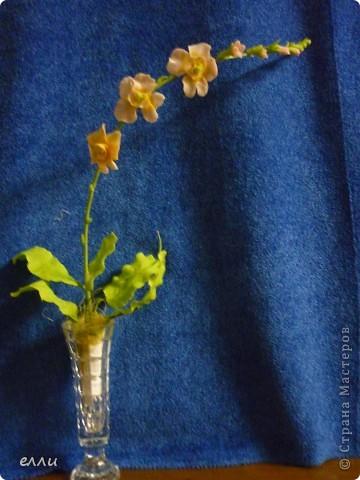 Орхидеи,получился букетик. фото 3