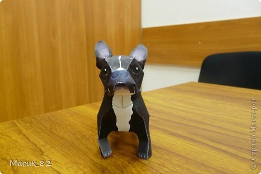Мои бумажные животные фото 6