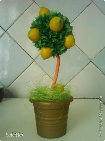 Это мое самое маленькое деревце - лимонное. фото 2