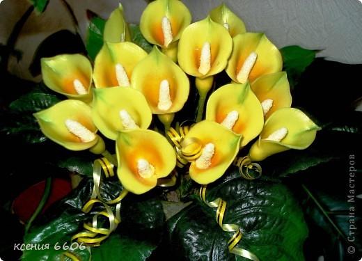 цветы коалы фото: