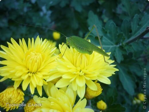 А у вас есть такие цветы в саду? А у меня их много. фото 8
