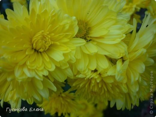 А у вас есть такие цветы в саду? А у меня их много. фото 9