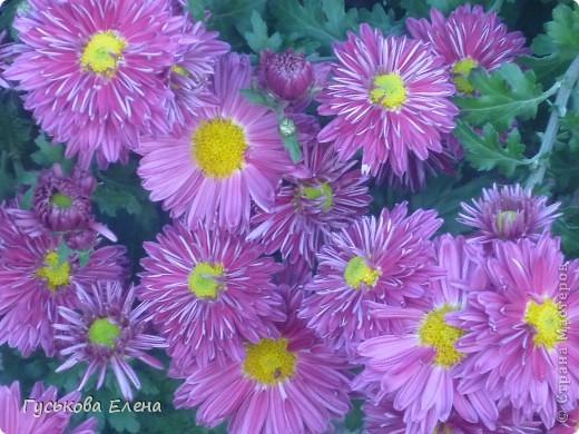А у вас есть такие цветы в саду? А у меня их много. фото 11