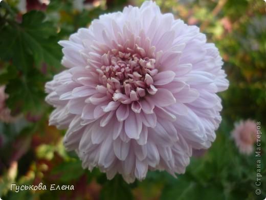 А у вас есть такие цветы в саду? А у меня их много. фото 19