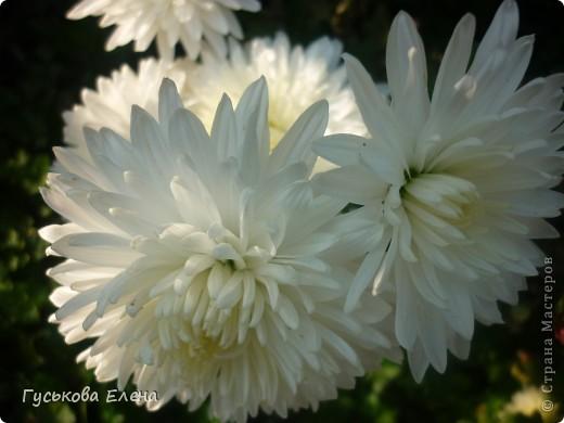 А у вас есть такие цветы в саду? А у меня их много. фото 17