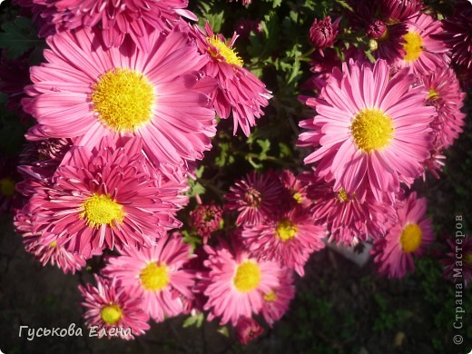 А у вас есть такие цветы в саду? А у меня их много. фото 16