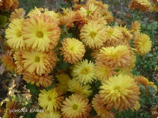 А у вас есть такие цветы в саду? А у меня их много. фото 14