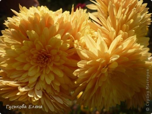 А у вас есть такие цветы в саду? А у меня их много. фото 13