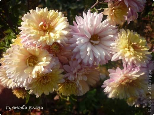 А у вас есть такие цветы в саду? А у меня их много. фото 12