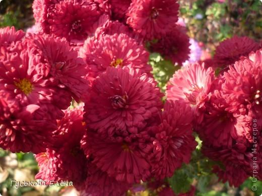 А у вас есть такие цветы в саду? А у меня их много. фото 1