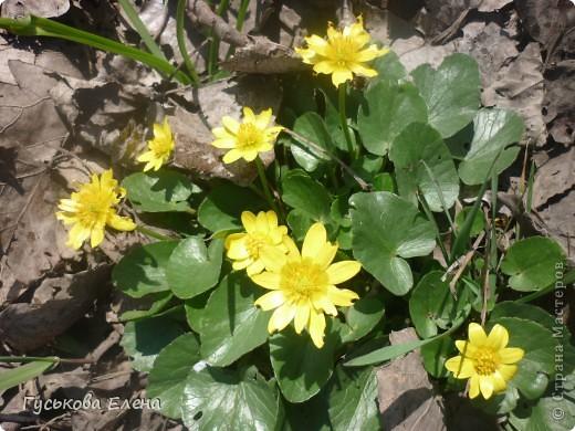 В лесу много цветов. фото 1