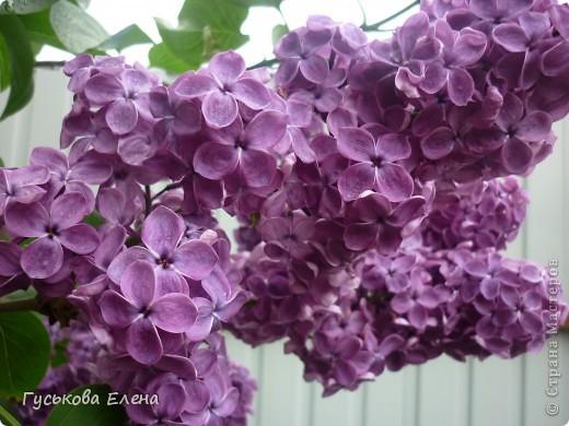 А у вас есть такие цветы в саду? А у меня их много. фото 7