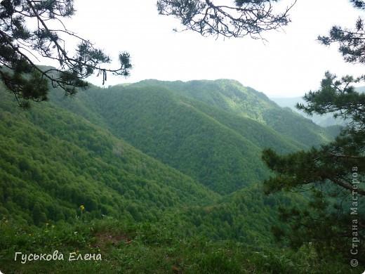 В лесу много цветов. фото 3