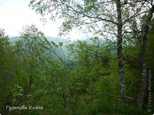 В лесу много цветов. фото 4