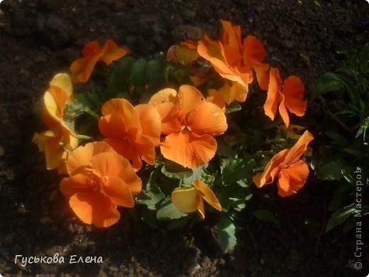 А у вас есть такие цветы в саду? А у меня их много. фото 3