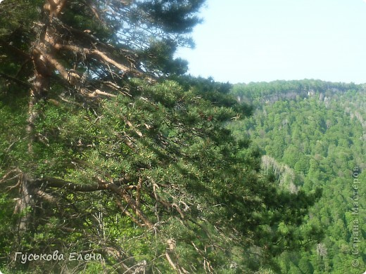 В лесу много цветов. фото 11