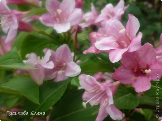 А у вас есть такие цветы в саду? А у меня их много. фото 2