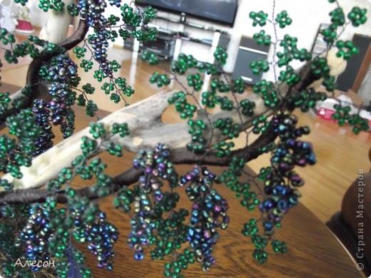 Виноградная  лоза. фото 2