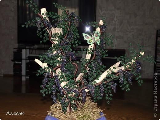 Виноградная  лоза. фото 1