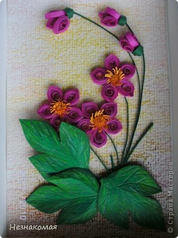 Мои цветы. фото 1