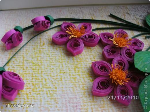 Мои цветы. фото 2