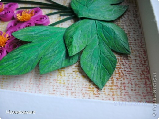 Мои цветы. фото 3