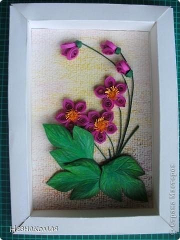 Мои цветы. фото 5