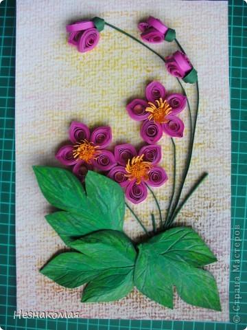 Мои цветы. фото 4