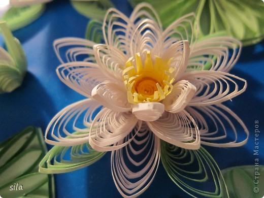 снова лилии фото 1