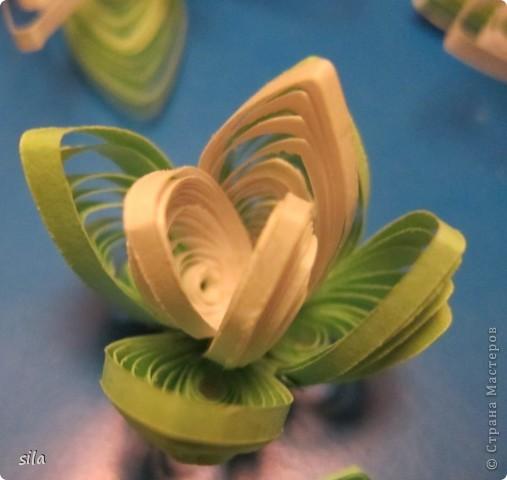 снова лилии фото 8
