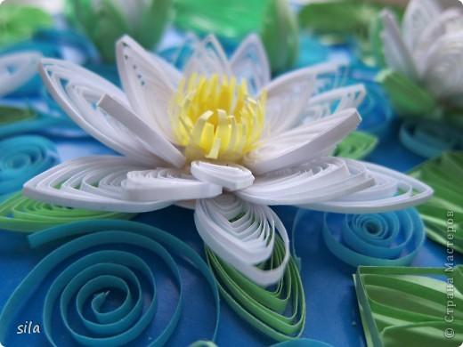 снова лилии фото 3