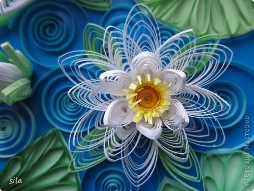 снова лилии фото 4