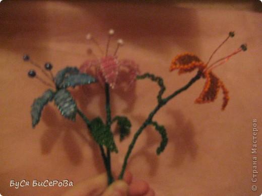 Мои лилии.... Такие красивые!!! фото 1